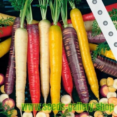 Σπόροι καρότου Rainbow mix