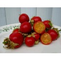 Lychee Seed Litchi chinensis Seeds Litchi