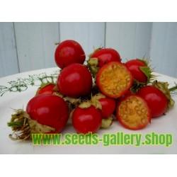 Semillas de Tomate Litchi - Espina Colorada