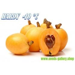 Saturn Peach - Paraguayo - Platerina Peach Seeds (Prunus persica var. platycarpa)