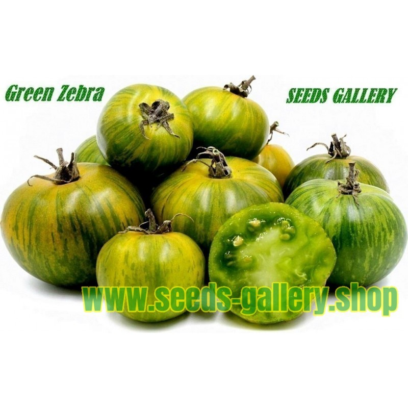 Σπόροι Ντομάτα Green Zebra