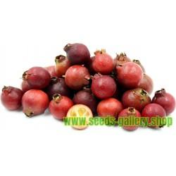 Σπόροι γκουάβα-φράουλα
