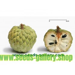 Sugar Apple Seeds, Sweetsop Seeds