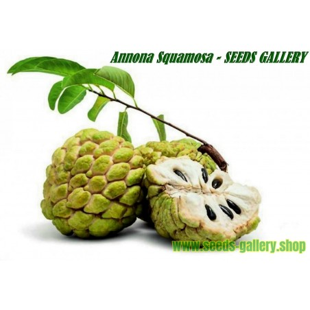 Sugar Apple Seeds, Custard Apple (Annona Squamosa)