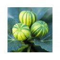 Wild Strawberry Seeds ''RUGIA''