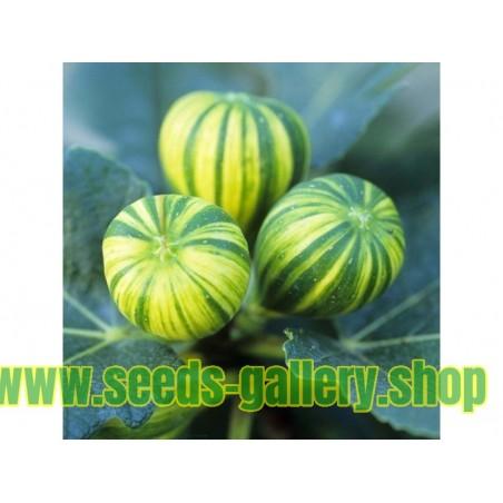 Semillas de Fresa de Bosque ''RUGIA''