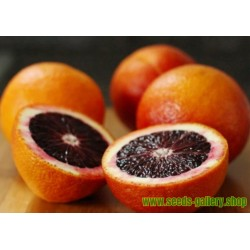 "Graines de Orange sanguine ""MORO"""