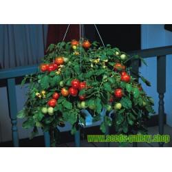 Tomatfrön Montecarlo - Idealisk för blomkrukor