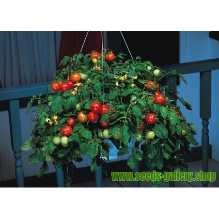 Semillas de Mostaza Negra (Brassica Nigra)