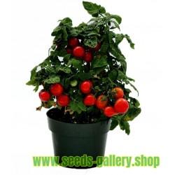 Sementes de Tomate Montecarlo