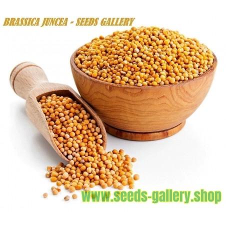 Σπόροι Καφέ μουστάρδα (Brassica juncea)