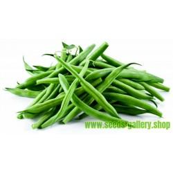 Σπόροι Φασόλι Fasold (Phaseolus vulgaris)