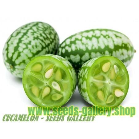 Semillas de Cucamelon - Pepino amargo mexicano