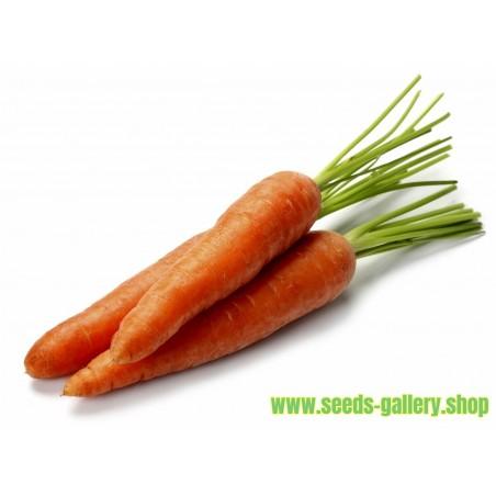 Semillas de zanahoria Danvers