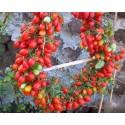 Giant Blackberry Seeds (Rubus fruticosus)