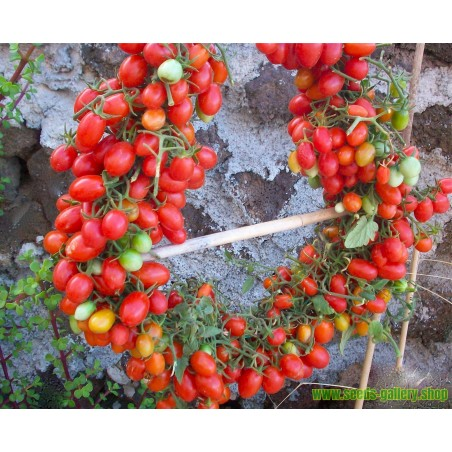 Semillas de Mora Gigante (fruta)