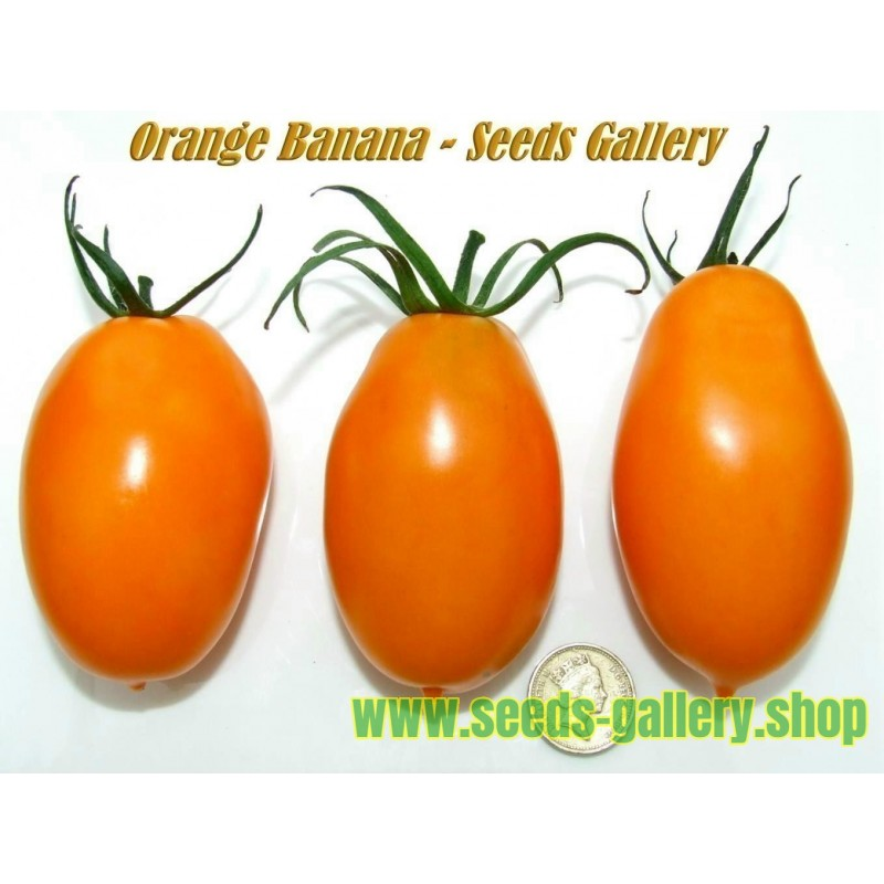 Orange Banana Tomato Seeds