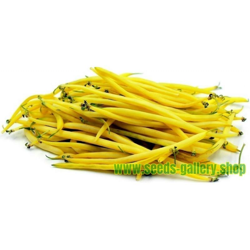 Sementes de Feijão Amarelo 'Maxidor'