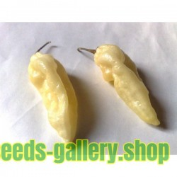"Graines de Piments ""Fatalii White"""
