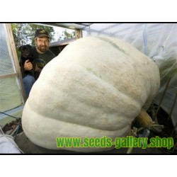 Giant White Pumpkin Seeds Lumina