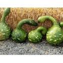 Sementes de Pimenta Aji Pineapple