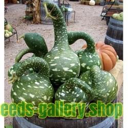 Κολοκύνθη σπόρων Gooseneck