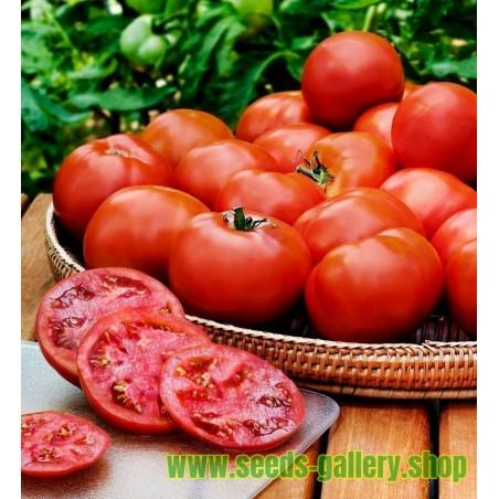 Tomatfrön HEINZ 1350