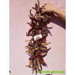"""Semillas de Pimiento """"Vezanka"""" Old variedad de Serbia"""