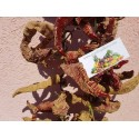 Sementes de Espinheiro-branco (Crataegus laevigata)