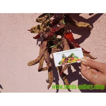 Graines de Aubépine (Crataegus) plante médicinale