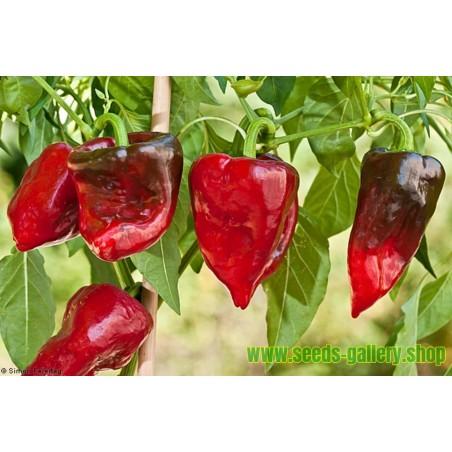 Ancho Mulato Poblano Chili Seeds