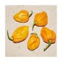 Semillas de Pimiento Big Sun - Yellow Sun Habanero