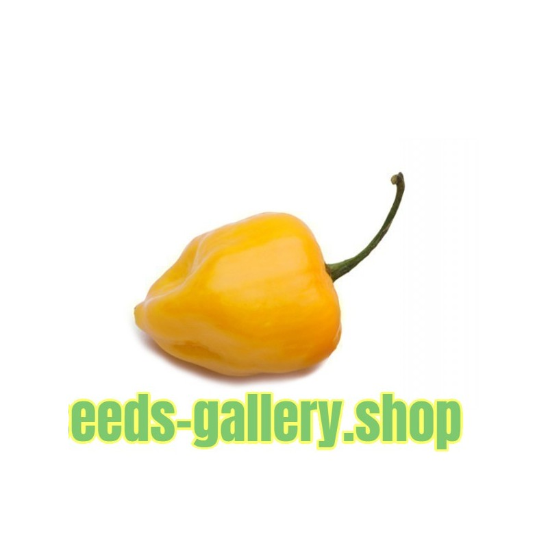 Big Sun Habanero Seeds - Yellow Sun