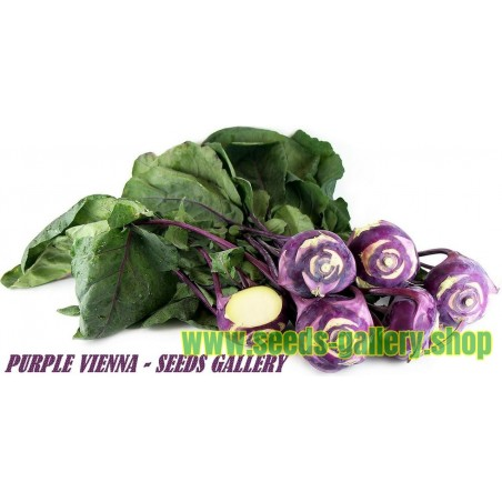 "Kohlrabi Seeds ""Purple Vienna"""