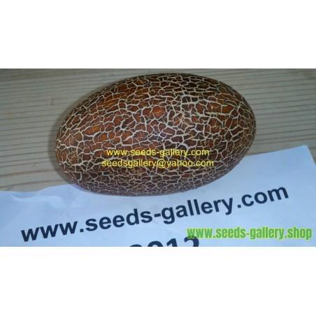 Sikkimgurka Frön