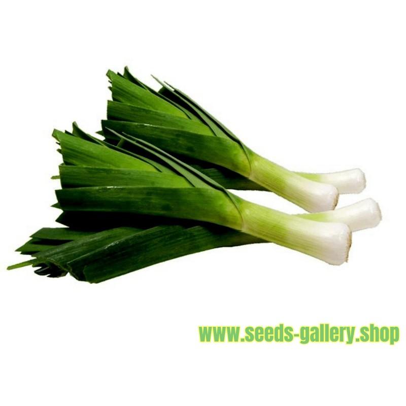 """Praziluk Seme """"Slon"""" (Allium porrum)"""