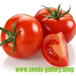 Sementes de Tomate Marglobe