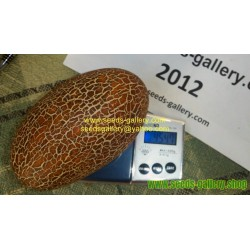 Sikkim Gurkensamen - Braune Netzgurke