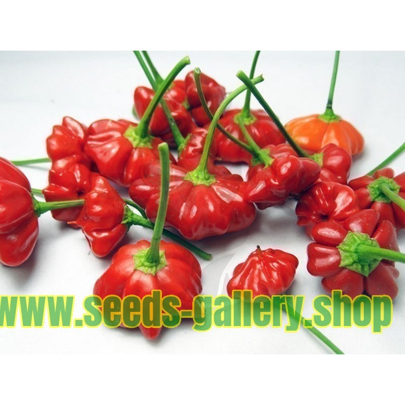 Brazilian Starfish Pepper Seeds
