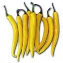 Chili Seeds 'Golden Cayenne'