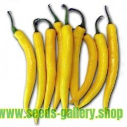 Σπόροι πιπεριά Τσίλι Golden Cayenne
