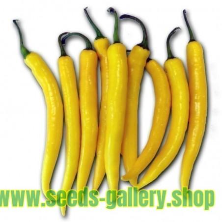 Golden Cayenne Chili Samen