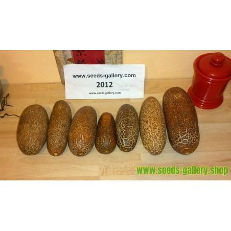 Tamarillo Seeds