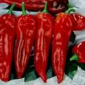 Semillas de chile, pimiento CORNO DI TORO ROSSO