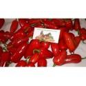 Early Jalapeno Chili Seeds