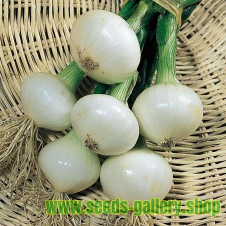 Graines Oignon blanc Paris Silverskin