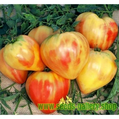 Graines Tomate ancienne bigarrée 'Orange Russian'
