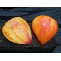 Sementes de limão-taiti ou limão-tahiti