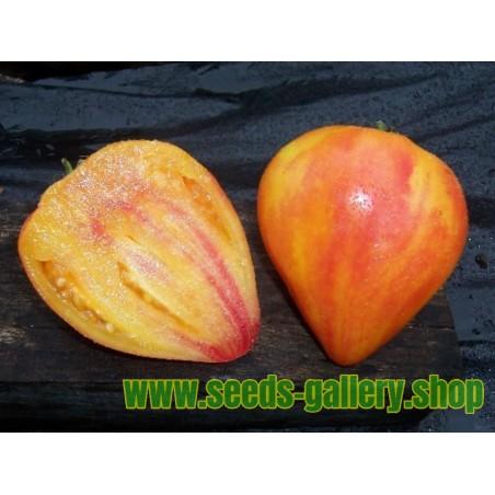 Tahitilime Frön (Citrus ×latifolia)