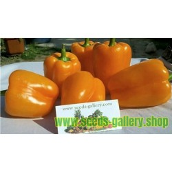 Orange Sun Sweet Pepper Seeds